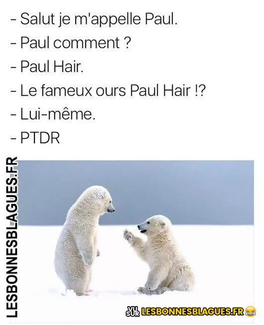 L'ours Paul Hair